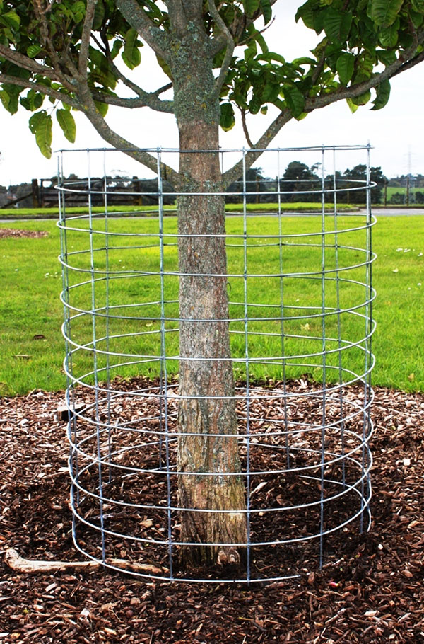Anchor Tree Mesh Amp Barbed Wire Anchor Wire